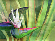 Bird Of Paradise Flower Painting Framed Prints - Bird of Paradise Framed Print by Kris Parins