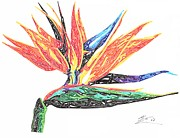 Bird Of Paradise Drawings - Bird Of Paradise by Kyle Sim