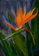 Marsha Thornton - Bird of Paradise