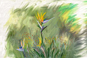 Lobby Art Paintings - Bird of Paradise Plant by Angela A Stanton