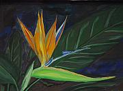 Bird Of Paradise Flower Painting Framed Prints - Bird of Paradise Framed Print by Prasida Yerra