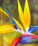 Strelitzia Painting Posters - Bird of Paradise Revisited Poster by Darren Robinson