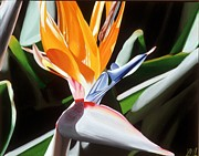 Photorealistic Posters - Bird of Paradise Poster by Sharon Von Ibsch