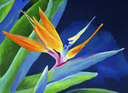 Tropical Flower Painting Posters - Bird of Paradise Poster by Stephen Anderson