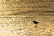 Paul Topp Art - Bird on a Golden Shore by Paul Topp