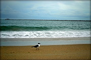 Wilmington Photos - Bird on a Pastel Beach  by Amy Lucid