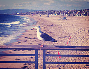 Beach Fence Digital Art Posters - Bird On A Rail Poster by Phil Perkins