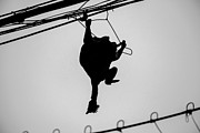 Grit Photos - Bird on a Wire by Dean Harte