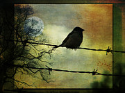 Marie Gale Prints - Bird on a Wire Print by Marie  Gale