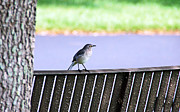 Park Benches Prints - Bird on Bench Print by Aimee L Maher