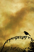 Warm Digital Art - Bird On Branch Montage by Dave Gordon