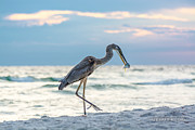 Panama City Beach Photo Originals - Bird on Panama City Beach by Joe Spedale jr