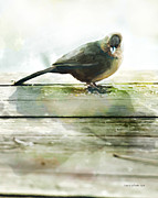 Author And Photographer Laura Wrede Posters - Bird on the Deck Poster by Author and Photographer Laura Wrede