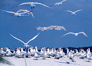 Flying Seagulls Originals - Bird Party by Jean Wolfrum