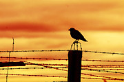 Captivity Posters - Bird sitting on prison fence Poster by Michal Bednarek