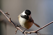 Marianne Kuzimski - Bird Swing