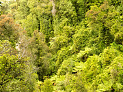 Forestation Framed Prints - Bird view of lush green sub-tropical NZ rainforest Framed Print by Stephan Pietzko