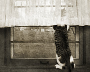 Striped Mixed Media Prints - Bird Watching Kitty Cat BW Print by Andee Photography