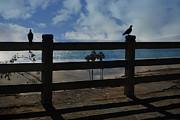 Nina Prommer - Bird Watching