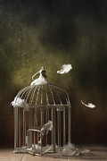 Floating Prints - Birdcage Print by Christopher and Amanda Elwell
