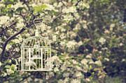 Bird Cage Framed Prints - Birdcage In Blossom Framed Print by Christopher and Amanda Elwell