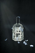 Bird Art - Birdcage by Joana Kruse