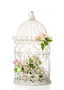 Shabby Chic Flowers Prints - Birdcage of spring blossom Print by Christopher and Amanda Elwell