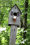 Folk Art Digital Art Posters - Birdhouse Collection I Poster by Suzanne Gaff