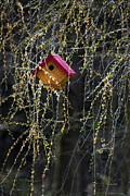 Little Bird Digital Art - Birdhouse In Larch Tree by Christina Rollo