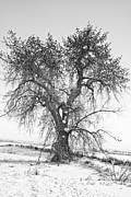 Winter Trees Metal Prints - Birdland Black and White Metal Print by James Bo Insogna