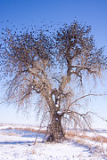 Winter Trees Metal Prints - Birdland Metal Print by James Bo Insogna