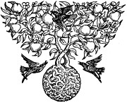 Fruit Tree Art Drawings - Birds and Fruit Tree Engraving by