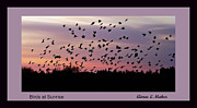 Flocks Of Birds Prints - Birds At Sunrise Poster Print by Aimee L Maher