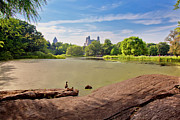 Central Park Prints - Birds Eye View Print by Madeline Ellis