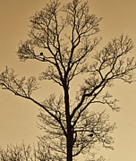 Raw Umber Metal Prints - Birds in a Tree Metal Print by Bold Coast Photography
