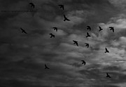 Claudia Maestre - Birds in Flight