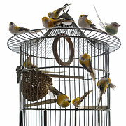 Medium Group Of Animals Posters - Birds inside and outside a cage Poster by Bernard Jaubert