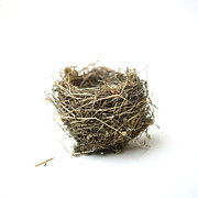 Wildlife Art - Birds nest by Bernard Jaubert