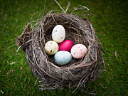 Easter Eggs Prints - Birds Nest with Easter Eggs Print by Edward Fielding