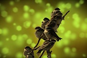 Flocks Metal Prints - Birds of A Feather Metal Print by David Dehner
