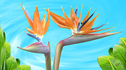 Tropical Birds Of Hawaii Framed Prints - Birds Of Paradise. Couple Framed Print by Ben and Raisa Gertsberg