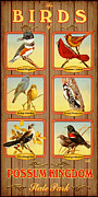 Possum Posters - Birds of Possum Kingdom Poster by Jim Sanders