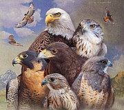 Merlin Posters - Birds Of Prey Western Colorado Poster by R christopher Vest