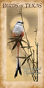Flycatcher Digital Art - Birds of Texas Scissortail Flycatcher by Jim Sanders