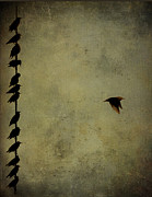 Roost Art - Birds on a wire 2 by Jim Wright