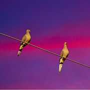 Canvas Photo Originals - Birds on a Wire by Michael Waters