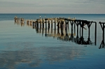 Michael Originals - Birds On Old Dock on the Bay by Michael Thomas