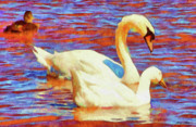 Swans... Digital Art Prints - Birds on the Lake Print by Jeff Kolker