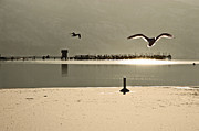 Sun Rays Pyrography Metal Prints - Birds on thine ice Metal Print by Brian Arnold