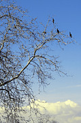 Cloud - Birds On Tree by Ben and Raisa Gertsberg